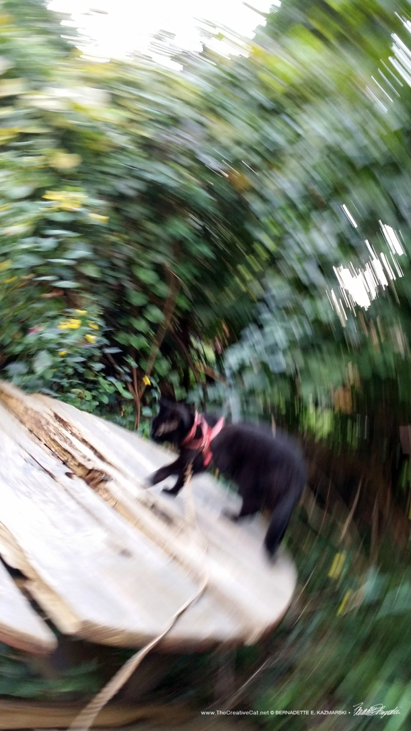 Just one of those weird spinning photos. Maybe it's Mimi.