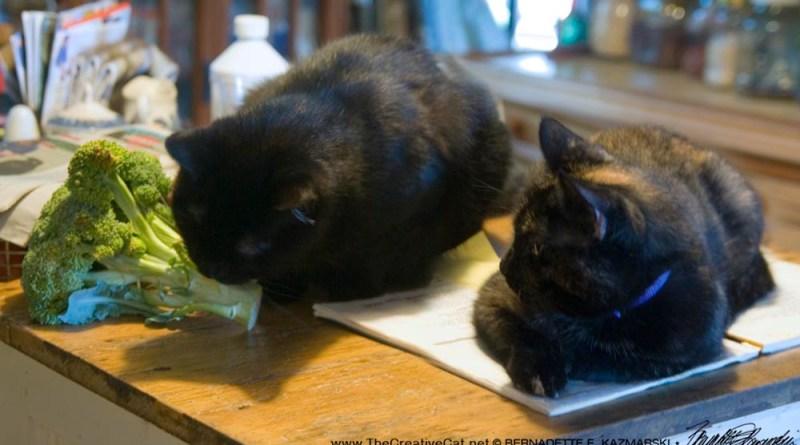 Mewsette likes broccoli.