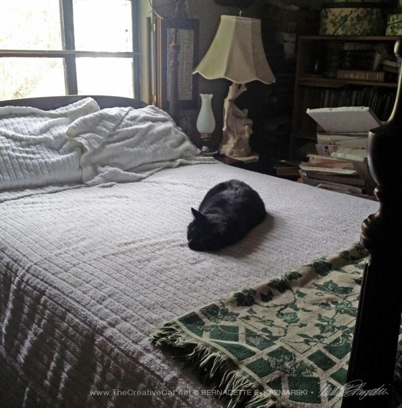 091514-Smokie-Bean-bed
