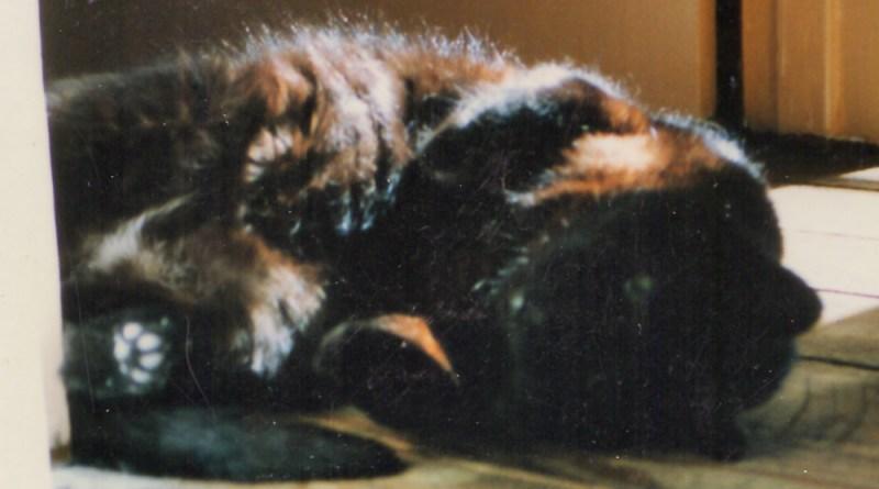 black cat rolling on floor