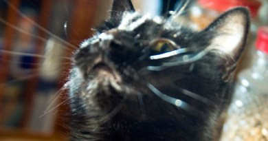 Mr. Sunshine and his crazy whiskers.