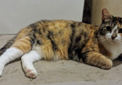 Cat for Adoption: Katie Holmes