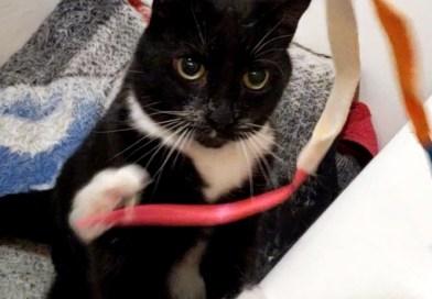 Cats for Adoption: A Spunky Senior Kitty