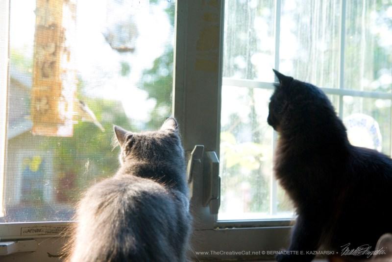 092616-hamlet-ophelia-birdwatching