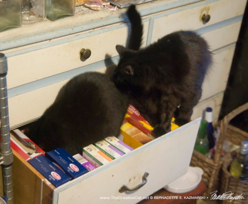 Bella gives the drawer a thorough inspection.
