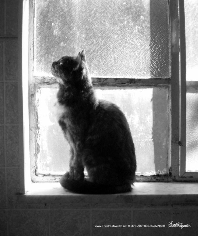 Autumn Sun, black and white.