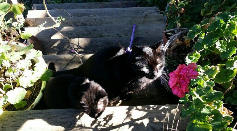 Mimi and Mewsette in the sun on the steps.