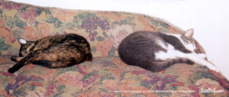 Kelly and Namir sleeping back to back on the couch, position 1.