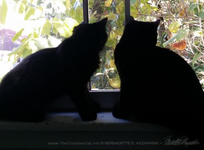two black cat silhouettes