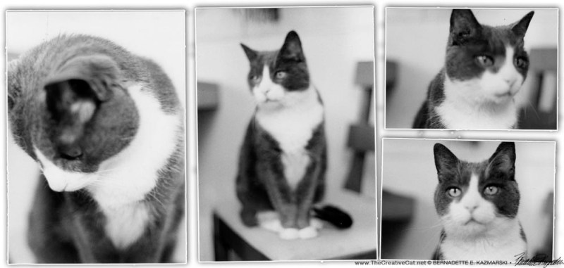 Some artsy shots of Bootsie from 1983.