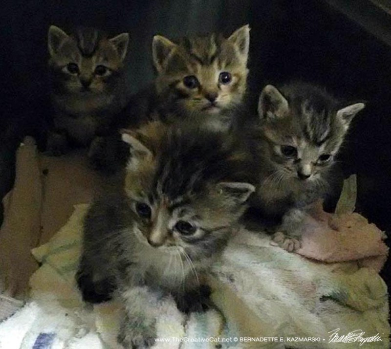 Four darling kittens...with ringworm.
