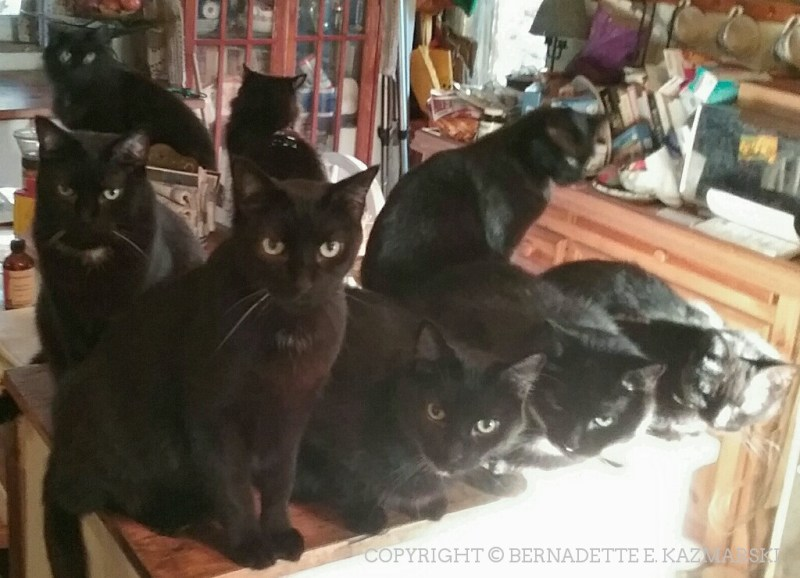 Eight black cats!