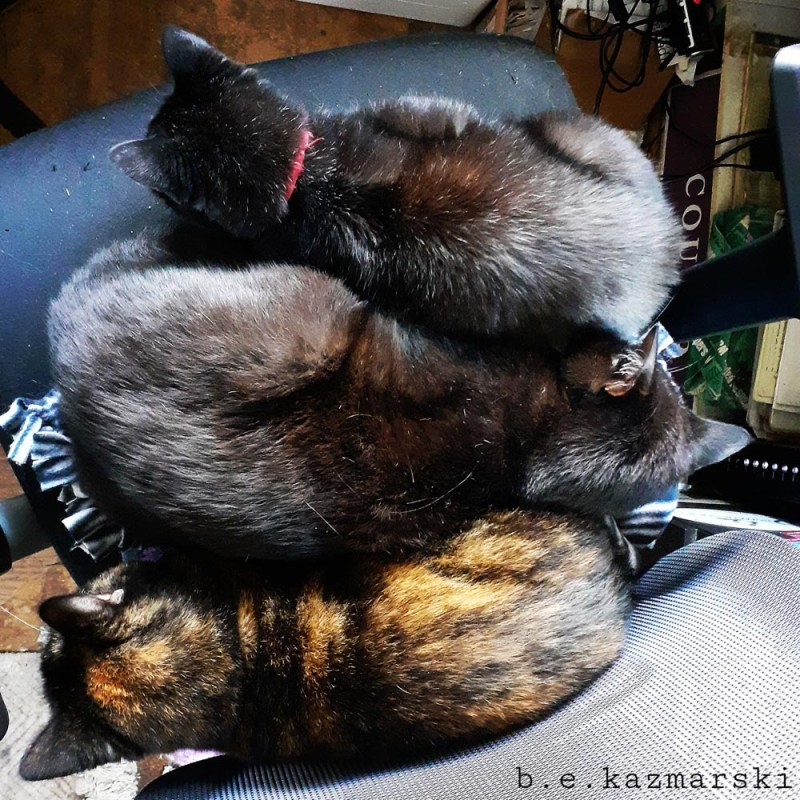 three cats on chair