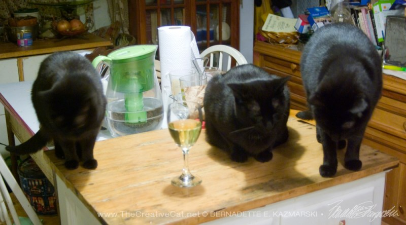 three cats with glass of wine