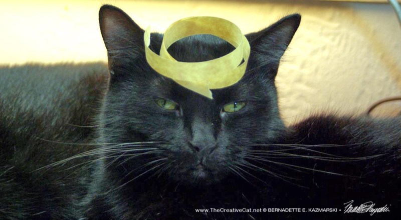 Mr. Sunshine with tape on his head.