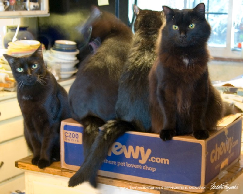 Giuseppe, Bean, Sunshine and Basil claim the box.