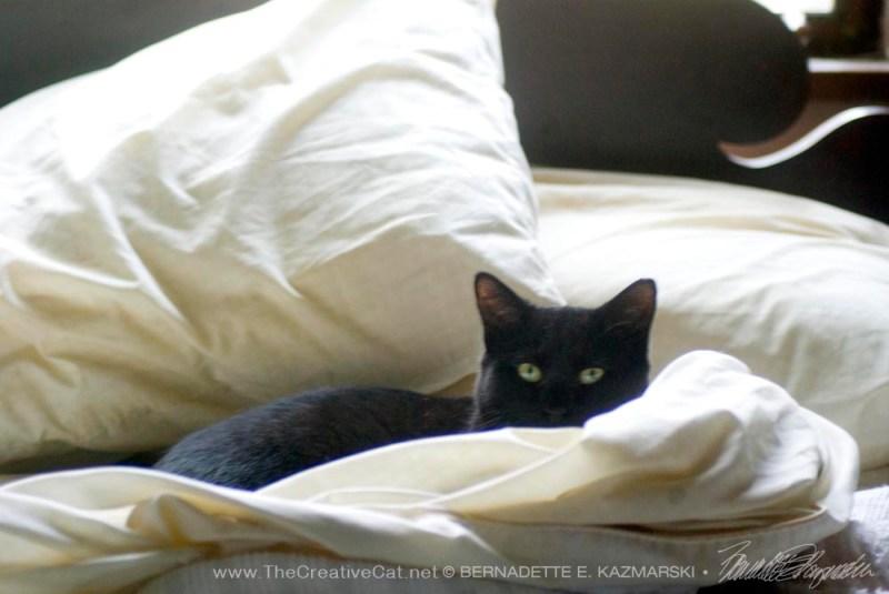 black cat in bed