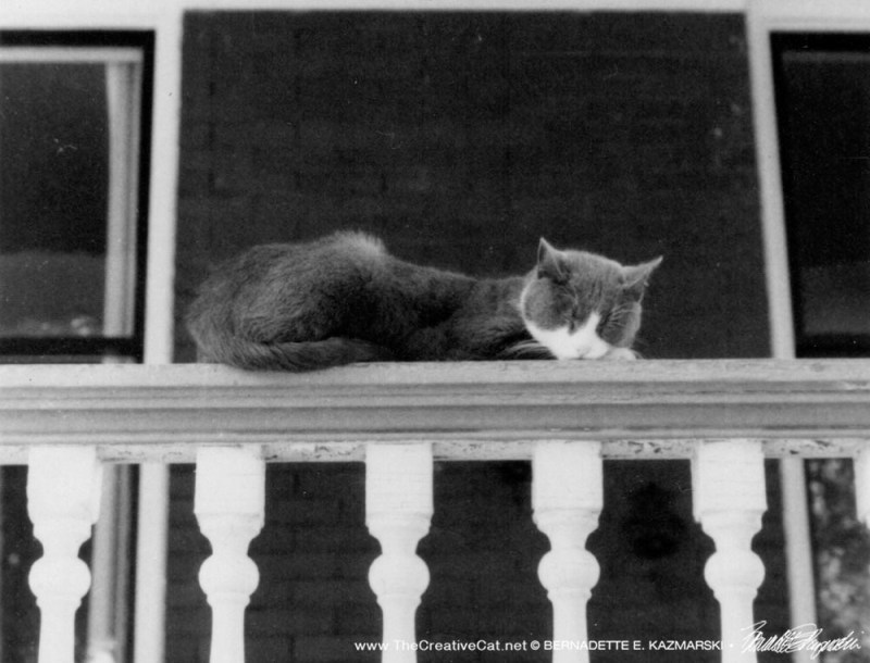 A nap on the railing.