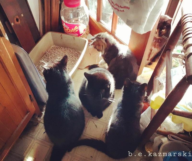 five cats by door