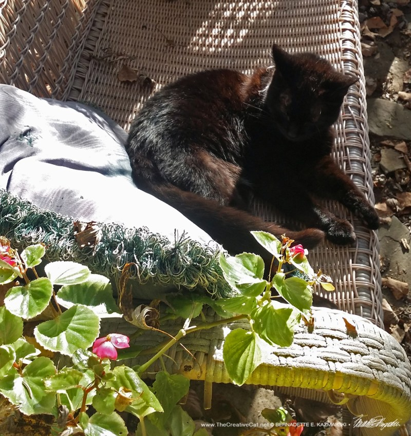 Mimi on the settee.