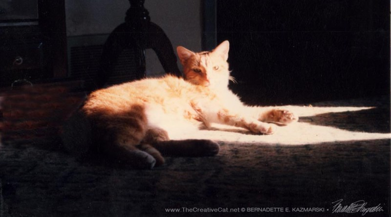 Allegro relaxing in a sunbeam.