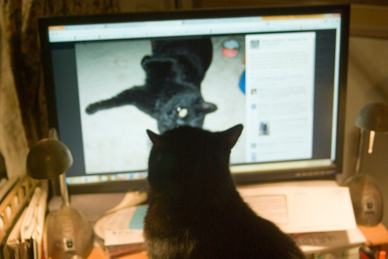 black cat looking at black cat
