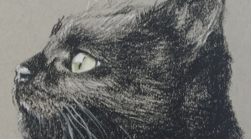 charcoal sketch of cat watching