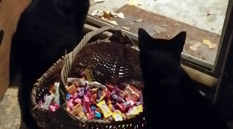 two black cats with candy