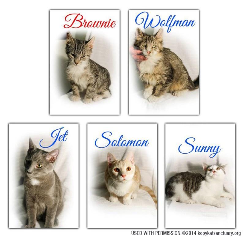 Cats available through Kopy Kat Sanctuary.