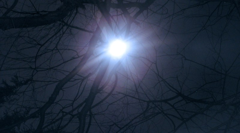 The not-quite-full Beaver Moon shining through the bare branches of my wild black cherry tree, from two years ago.
