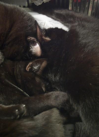 black cats sleeping in a heap.