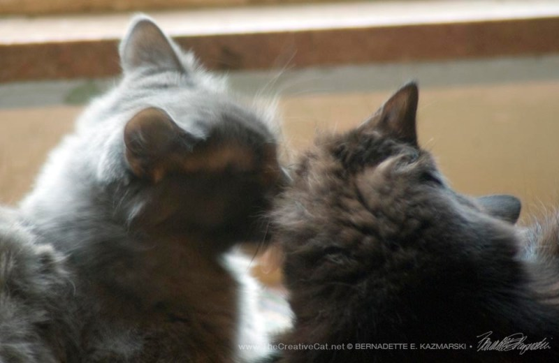 Teddy Bear and Simon having a little mutual bath.