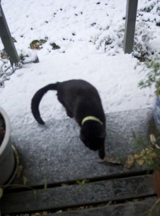 black cat on snowy deck