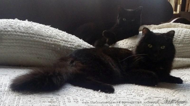 Bella and Basil looking regal.