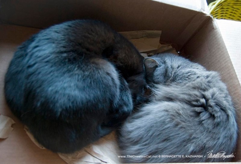 Napping in a box.