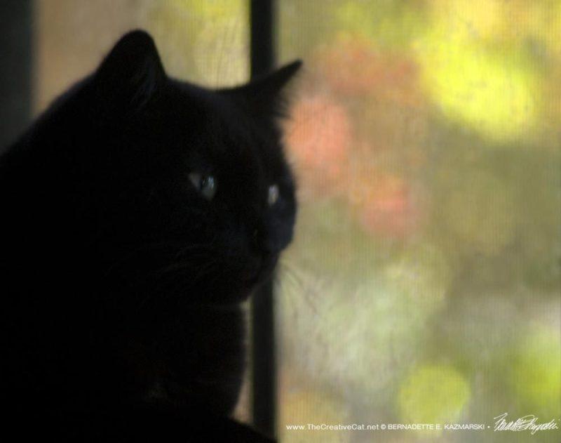 Bella at the window.