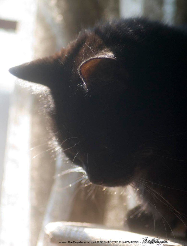 Mewsette in the sun.