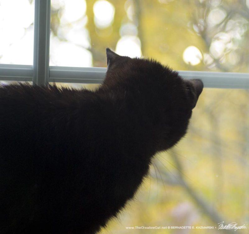 Mimi observes a sunny autumn morning.