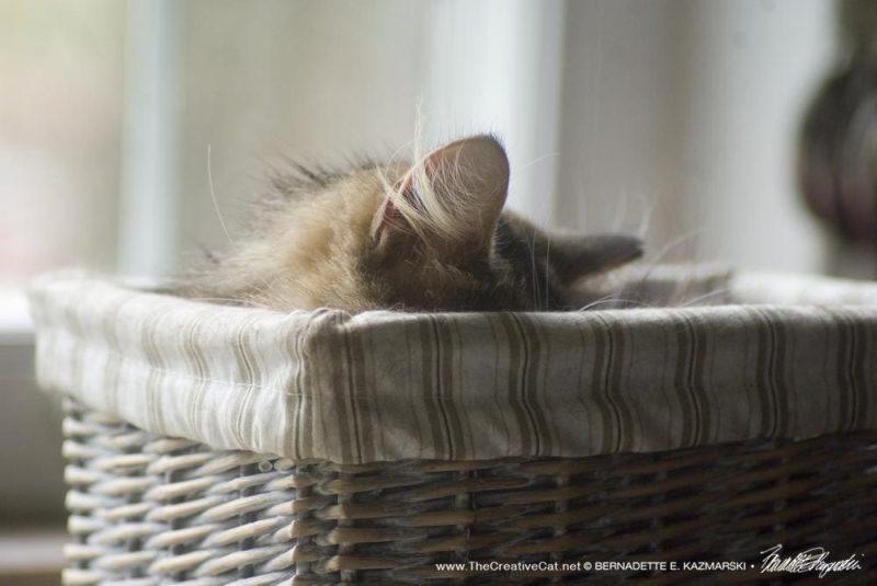 ...asleep.
