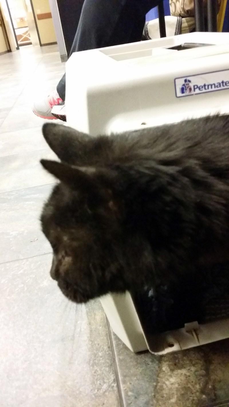 black cat in carrier