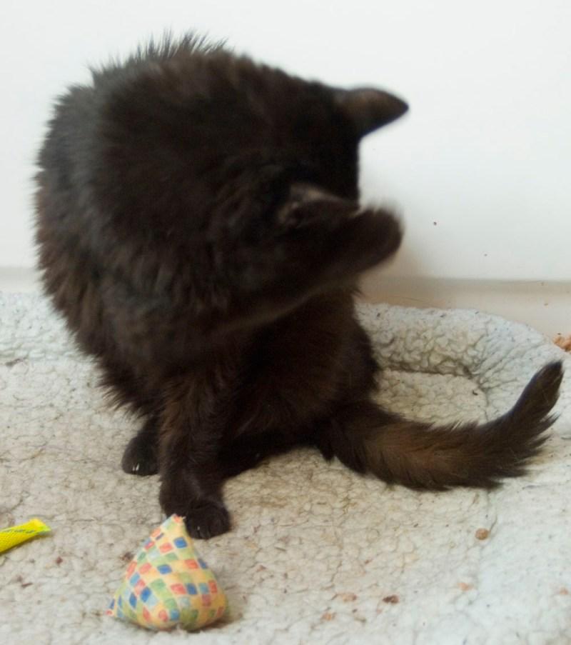 black cat bathing