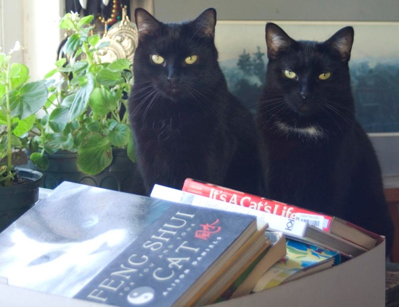 two black cats with books