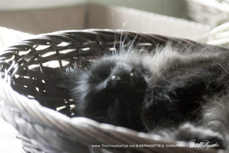 Hamlet in a basket.