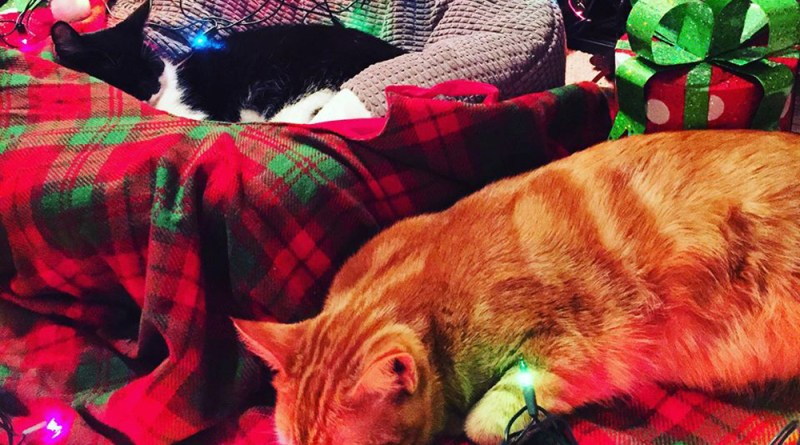 Finn and Dinah enjoy helping to decorate.