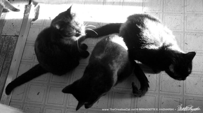 Three in the sun.
