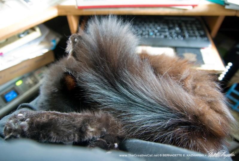 Basil on my lap.