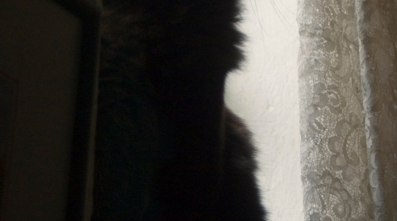 long-haired black cat silhouette