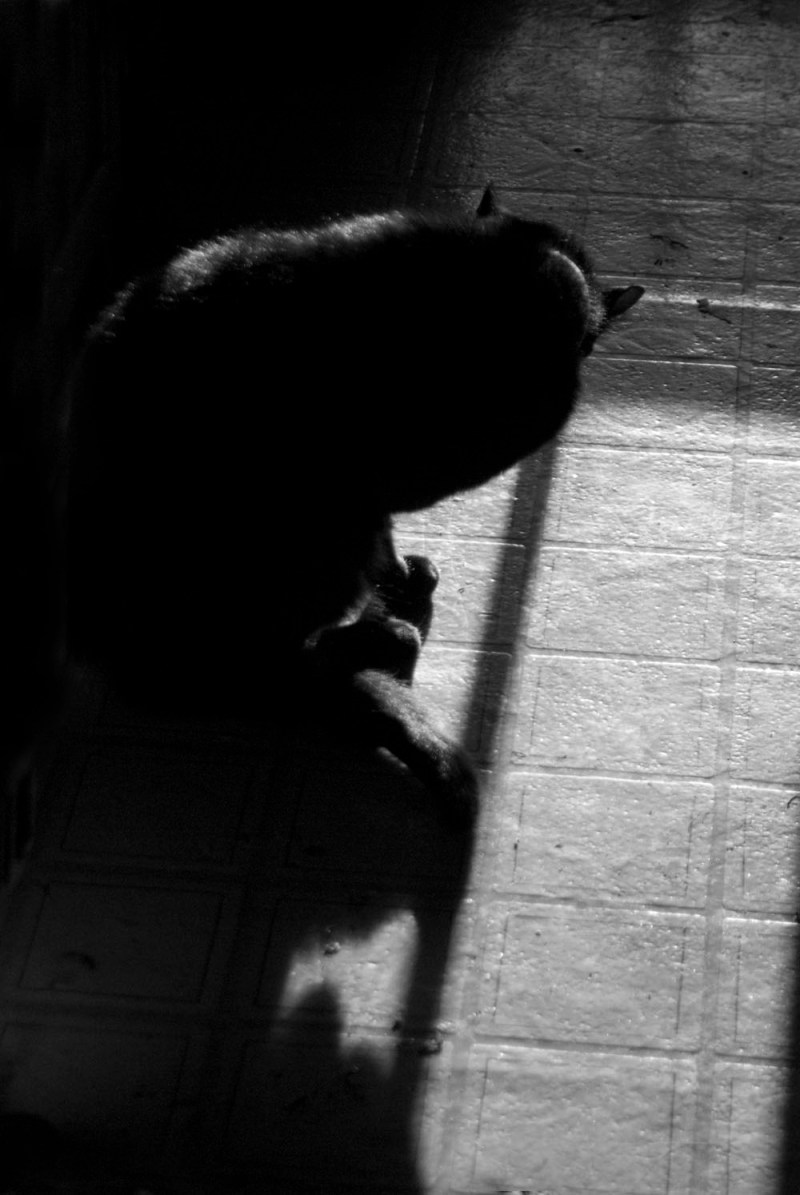 black and white photo of cat bathing Daily Cat Photo