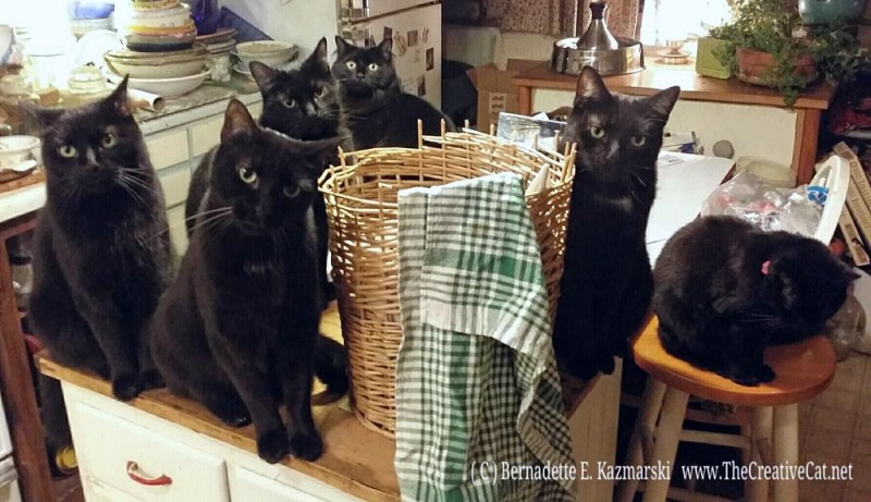 Oh, the excitement of folding dishtowels. Daily Cat Photo, six black cats