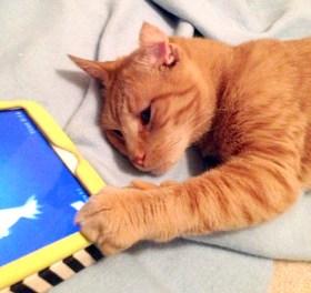 orange cat with ipad